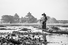 The man of the Lake (Feca Luca) Tags: street asia myanmar birmania blackwhite people pescatore fisherman travel nikon inle