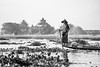The man of the Lake (Feca Luca) Tags: street asia myanmar birmania blackwhite people pescatore fisherman travel nikon inle