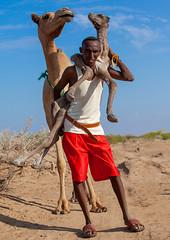 A somali man is holding a new born baby camel on his back, Awdal region, Lughaya, Somaliland (Eric Lafforgue) Tags: africa africanethnicity animal awdal camel climatechange developingcountry domestic domesticated dromedary drought eastafrica emergenciesanddisasters environment extremeweather fulllength herbivorous hornofafrica livestock lookingatcamera lughaya mammal man men muslim newborn oneadultonly onemanonly oneperson outdoors ruralscene socialissues soma6595 somalia somaliland vertical weather awdalregion