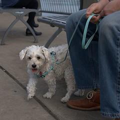 Cute Little Doggie (Scott 97006) Tags: dog canine animal pet cute leash
