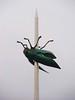 Ladeuzeplein, Leuven (Stewie1980) Tags: leuven louvain löwen vlaanderen flandre flandern flanders belgië belgique belgien belgium monseigneur ladeuzeplein plein totem jan fabre kunstwerk kever square art beetle bug insect
