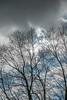 DSC00176 (johnjmurphyiii) Tags: 06416 clouds connecticut cromwell originalarw shelly sky sonyrx100m5 spring usa yard johnjmurphyiii