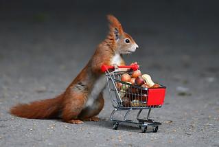 Heute waren die Nüsse im Angebot! / Today the nuts were a special offer! ;-))