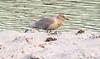 Glaucous gull / Hvítmáfur (Larus hyperboreus) (thorrisig) Tags: 18112017 dýr fuglar glaucousgull hvítmávur larushyperboreus hvítmáfur máfar mávar animals sigurgeirsson sigurgeirssonþorfinnur dorres iceland ísland island icelandicbirds íslenskirfuglar thorrisig thorfinnursigurgeirsson thorri þorrisig thorfinnur þorfinnur þorri þorfinnursigurgeirsson birds bird gulls seagulls
