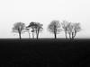 Trees (Barry Carr) Tags: olympus blackandwhite mist mono olympusm45mmf18 olympuspenf trees penf scotland monochrome m43 tree landscape angus minimalism bw 45mmf18 45mm