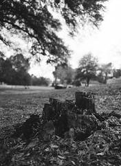 Fuji GA645/ Ilford HP5+ (Jason Mayers) Tags: nature outdoors trees bw fujiga645 fujifilm ilfordhp5 mediumformat 645