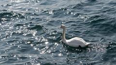Malcesine / Мальчезине (dmilokt) Tags: озеро lake nikon d750 dmilokt