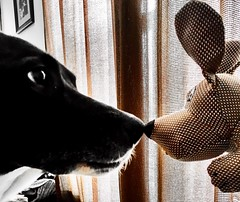 """A serious and good philosophical work could be written consisting entirely of jokes."" ―Ludwig Wittgenstein 🐶 🐕 (anokarina) Tags: 🐕 🐶 appleiphonese adobephotoshopexpress psmobile colorsplash puppy blackdog toy stuffed yellow gold brown highlands louisville kentucky ky"