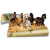 Five horses (jaci XIII) Tags: cavalos animais quadrúpedes oob horses animals quadrupeds