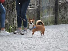 DSCN2770 (keepps) Tags: switzerland suisse schweiz spring vaud montreux dog