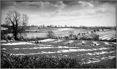 Fluffy Clouds, fluffy sheep, fluffy snow............... (Jason 87030) Tags: sheep farm fields baaa baaaaa baaaaaaaa baaaaaaaaa local shot mono bw bbw baaaaaaaaaaaaaaaaaaaaaaa animal cliud snow frame border cold weather season sky vista view village farmland daventry northants northamptonshire uk england composition tree naked branch countryside unitedkingdom greatbritain