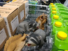 19Mar18 Someone at Aldi thought it would be silly to have the nice laughing raccoon attacking the freaked out squirrel. Very silly. #CF18 #Silly