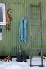 ... (johnpaddler) Tags: oslo norway oslofjord oslofjorden redfox rødrev vulpesvulpes
