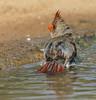 splish splash (Uncle Tee TX) Tags: flash godox beamer sony a6500 fe70300g