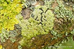 FB P1270716 (Pitzy's Pyx, keep snapping away!.) Tags: greensandtrust greensandvolunteers lumixfz1000 riverflit greensandridge sandysmithnaturereserve