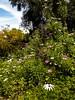 Wild flowers (Bob Hetherington) Tags: málaga andalucia spain españa wood trees flowers outdoor colour nature iphonex iphonephotography