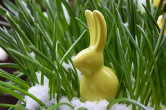 Hop(p)ing for spring (petrOlly) Tags: object objects europe europa germany deutschland moenchengladbach rheydt easter ostern wielkanoc balcony garden inthegarden spring snow plants plant easter2018