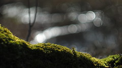 Micro landscape (nikjanssen) Tags: moss mos closeup green bokeh vintagelenses helios442 russianglass nature bokehlicious