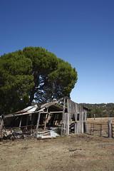 Dilapidated (Stueyman) Tags: sony alpha ilce za zeiss sel1635z barn summer sky tree ruin rustic wa westernaustralia australia au perth jarrahdale