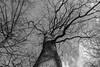 Bois de Sauvabelin, Lausanne (axel274) Tags: canonpowerhot lausanne g5x arbre tree forest wood sauvabelin vaud suisse schweiz switzerland