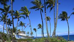 Mama fish house (Miradortigre) Tags: hawaii hawai usa isla mar sea sky cielo palm palmeras island oceano ocean pacific pacifico