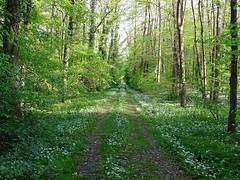 """Der Waldweg. Die Waldwege. Wege, die durch einen Wald führen, nennt man Waldwege. • <a style=""""font-size:0.8em;"""" href=""""http://www.flickr.com/photos/42554185@N00/41327721341/"""" target=""""_blank"""">View on Flickr</a>"""
