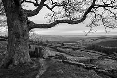 Stile (l4ts) Tags: landscape derbyshire peakdistrict darkpeak trees baslowedge curbargap stile drystonewalls derwentvalley blackwhite monochrome