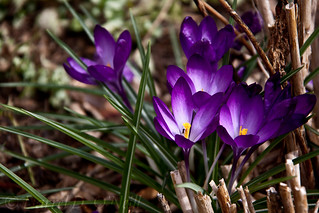 The Ant & the Crocus