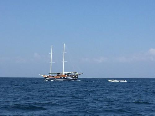 M/Y Deli, Dolphin Excursions, Djibouti