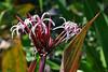Key West (Florida) Trip 2017 0256Ri 4x6 (edgarandron - Busy!) Tags: florida keys floridakeys keywest westmartellotower keywestgardenclub