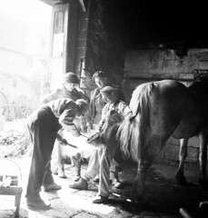 Personnel of the 7th Canadian Infantry Brigade watching a blacksmith shoeing a horse, Creully, France / Personnel de la 7e Brigade d'infanterie canadienne observant un forgeron ferrant un cheval, Creully (France) (BiblioArchives / LibraryArchives) Tags: lac bac libraryandarchivescanada bibliothèqueetarchivescanada canada blacksmith blacksmiths forgeron forgerons men hommes 7thcanadianinfantrybrigade 7ebrigaded'infanteriecanadienne horse cheval creully france donaldigrant june141944 14juillet1944 departmentofnationaldefence ministèredeladéfensenationale