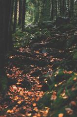 Yaremche (RINOMONSTA) Tags: yaremche ukraine forest mountains nikonfg hiking adventure