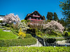 Spring in Weggis, Switzerland (jag9889) Tags: 2018 20180417 6353 architecture bloom building ch cantonlucerne cantonoflucerne centralswitzerland chalet europe flower helvetia house innerschweiz kantonluzern lu lucerne luzern outdoor schweiz spring suisse suiza suizra svizzera swiss switzerland tree weggis wäggis zentralschweiz jag9889