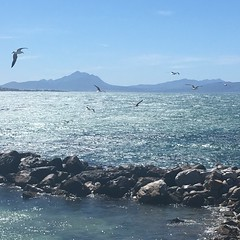 Betty's Bay (rjmiller1807) Tags: iphone iphonography iphonese gulls flight flying sea ocean bettysbay stonypoint westerncape southafrica 2017 rocks mountains views scenic scenery