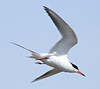 F_042218b (Eric C. Reuter) Tags: birds birding nature wildlife nj forsythe refuge nwr oceanville brigantine april 2018 042218