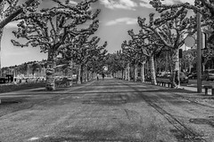 Genève, Quai Gustave Ador (Didier Mouchet) Tags: genève genf geneva suisse switzerland street strasenfotografie streetphotographie paysage platanes arbres nikond5300 nikon noiretblanc nuages blackandwhite bw bianconero didiermouchet