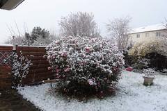 Mon jardin sous la neige (@bodil) Tags: france jardin garden snow neige