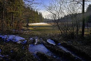 Letztes Eis am Waldrand