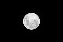 do wishes come true, I asked... (Tony Macrellis) Tags: moon fullmoon lunar bw blackandwhite blackwhite moonsouthernhemisphere southernhemisphere wishes endings beginnings full