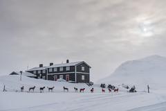 Morning at Iungsdalshytta (hanschristian_nielsen) Tags: norge skiferie iungsdalshytta dnt skarvheimen skiing hyttetilhytte cabintocabin snow winter norway animal dog