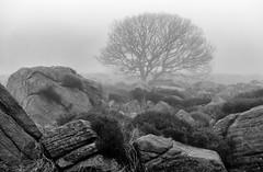 NB-1.jpg (neil.bulman) Tags: countryside longshawestate tree peakdistrict nature nationalpark derbyshire longshaw trees rocky rocks sheffield england unitedkingdom gb