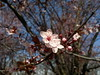 2018-04-03-13244 (vale 83) Tags: blossom nokia n8 friends coloursplosion colourartaward