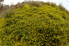Mossy world (damianziel) Tags: nature natur pentax pentaxk50 moss fisheye distorted fov flora green closeup smcpdafisheye1017mmf3545edif