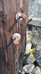 Every Piling Tells a Story (Bill 2 Million views) Tags: bcforestproducts plywood lumber kapoorlumber mill cnr trains selkirk walk raccoons
