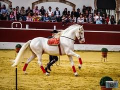 El arte a caballo (WWW.AMESPINOSA.ES FOTOGRAFIA) Tags: horse carmelo cuevas andalucia