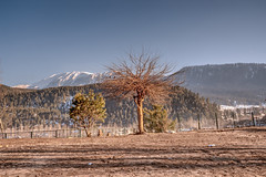 Kashmir, India. (Rambonp:loves all creatures of this universe.) Tags: kashmir kashmirjk trees sky mountains green canon7d nature hdr