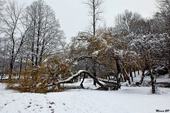 Photos Marco BP (22)_GF (marcbihanpoudec) Tags: bretagne neige plabennec plan deau lac banc arbres