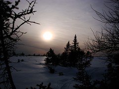 A Cloudy sunset (Orion 2) Tags: snowshoeing wilderness northernlandscape peatbog stuntedtrees borealforest snowshoes mountainsnowshoes cold evening backcountry muskeg fox snowshoehare moose newfoundlandandlabrador canada sun halo
