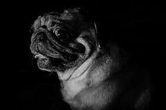 diego (joboss83) Tags: chien noireetblanc lowkey