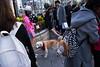 Nameless (Spontaneousnap) Tags: spontaneousnap street shanghai china city like candid documentary people publicareas lifestyle 上海 ricohgr takeabreak pet balloon dog